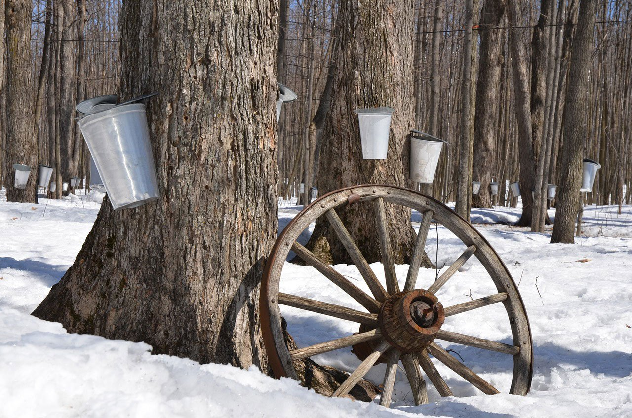 Maple Syrup Tour, Lunch, Games and Hiking at Forest Glen Preserve